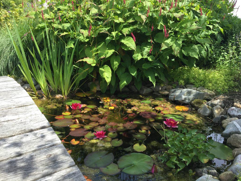 Een vijver als een onderdeel van een diervriendelijke tuin